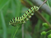 Caterpillar @ RCL