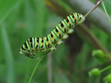 Caterpillar @ RCL