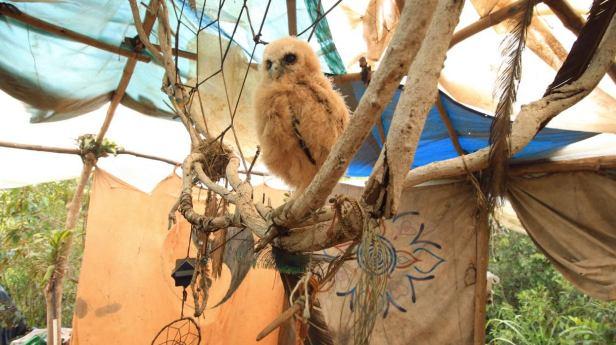 The Wisdom Owl