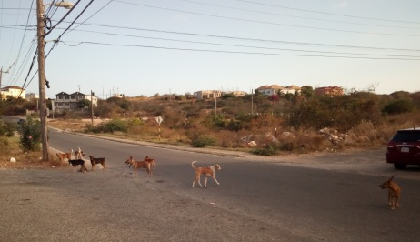 Wild dog pack on the streets