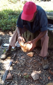 "A neighbor opening a coconut ""jelli"""