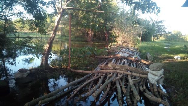 bamboocuring